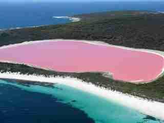 różowe jezioro w Australii